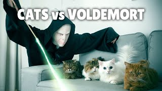 Cats vs Voldemort | Kittisaurus