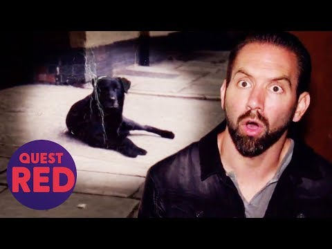Nick Tries To Befriend The Ghost Of A Dog Called Bruce   Paranormal Lockdown UK
