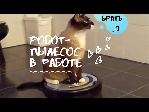 8 дней и робот-пылесос ILife V50 Pro на руках // Обзор умного помощника // Распаковка AliExpress