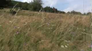 Odgłosy łąki w górach