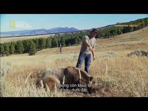 Documentary Bears 2017 HD - Giant Grizzly Bear Wild American