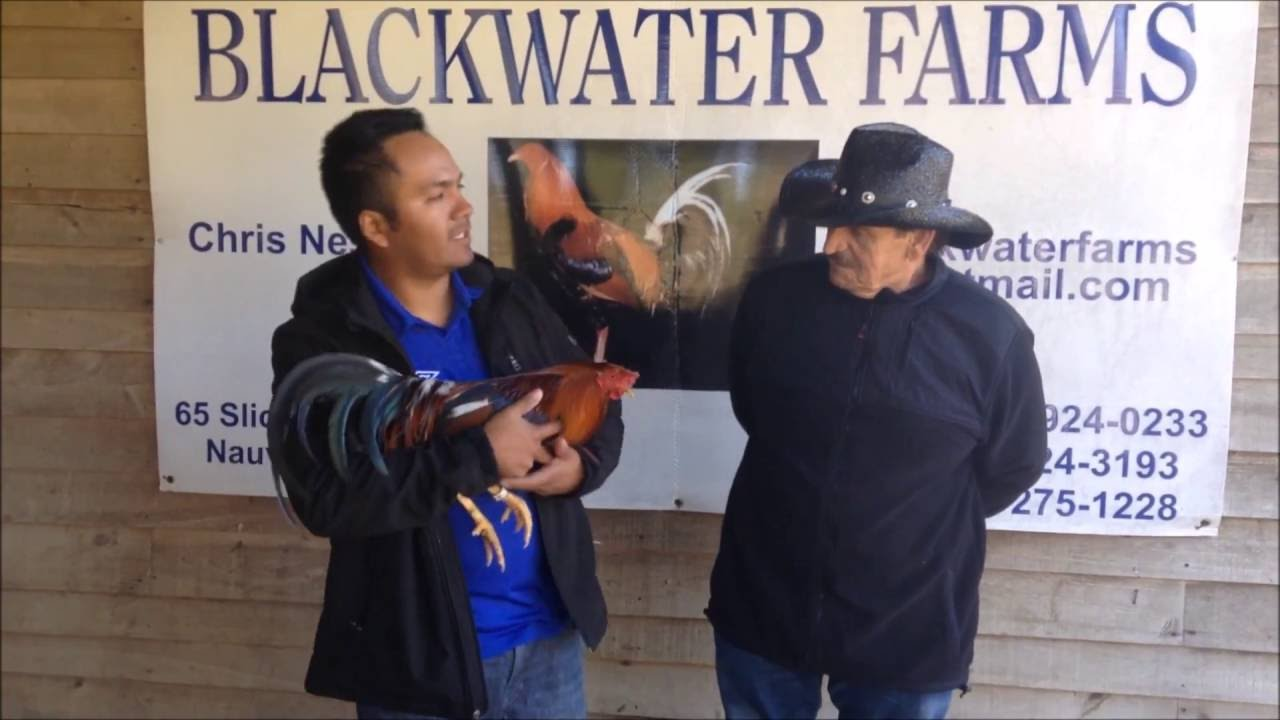 Visita a Carol Nesmith BLACK WATER FARM
