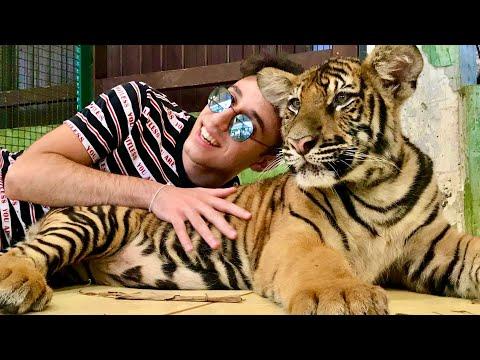 Tiger Kingdom Thailand 🇹🇭 🐅 🐯