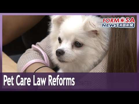 Pet care providers call for legal reforms to legalize professional home services