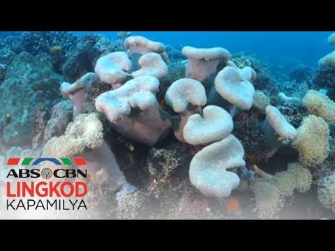 Help us protect the Verde Island Passage!