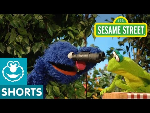 Sesame Street: Grover Bird Watches