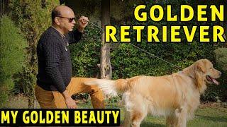 My Golden Beauty  Golden Retriever (International Standard Show Puppy Dog Breed)  Baadal Bhandaari