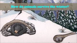 Kindergarten: Animals in Winter digital story telling project