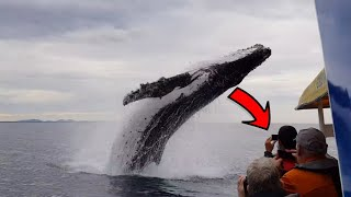 Whale Jumps On Boat | Animal Compilation | Pet And Animal | Animals Videos | Funny Animals | Ep-1