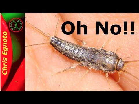 Learn Something About Silverfish!