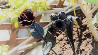 Spawaj z Piranem #37 - Spawane Kwiaty w 10 minut - Efektowna ozdoba do ogrodu którą zrobisz sam!