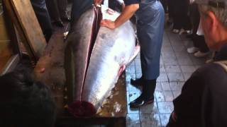 Japanese Cutting BIG Tuna in the Streets of Tokyo JAPAN
