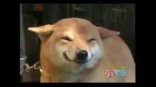 Best Jokes Подборки приколов (18+) Самые смешные собаки  Подборка моментов