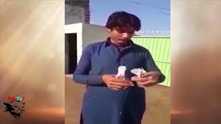 How To Check Male And Female Pigeon | Amazing Talent In Pakistan