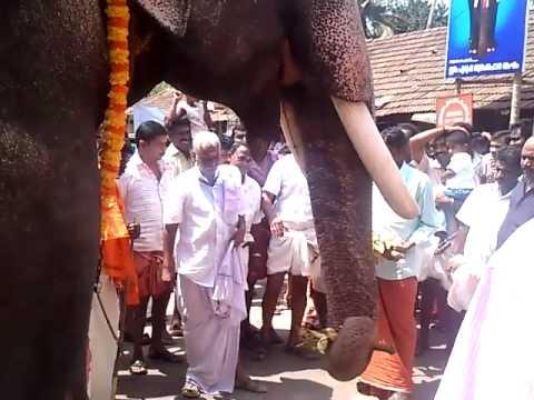 Reception for the elephant Nanu Ezhuthachan Sreenivasan.mp4