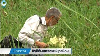 Вместо таблеток травяной отвар. Как и где собрать травы от всех болезней?