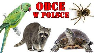 OBCE | Inwazyjne Gatunki Zwierząt w POLSCE