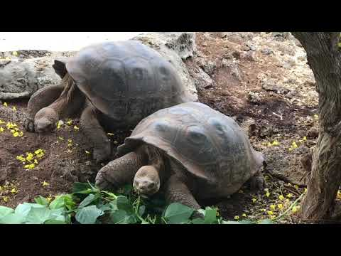 Day 4 @Galapagos | Giant Tortoises @Charles Darwin Research Center