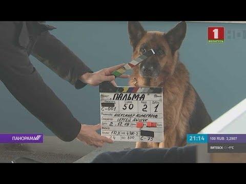 «Русский Хатико»: в аэропорту Бреста снимают фильм. Панорама
