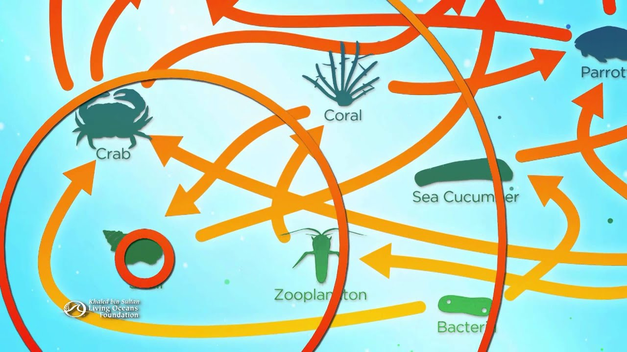 Coral Reefs: Unraveling the Web - YouTube
