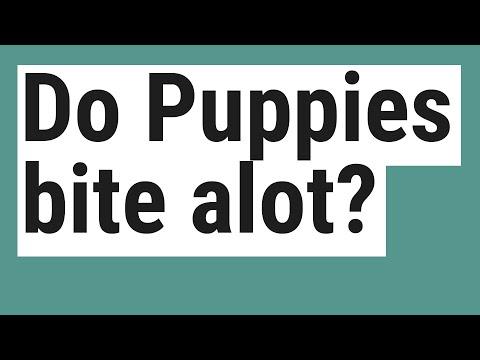do-puppies-bite-alot?
