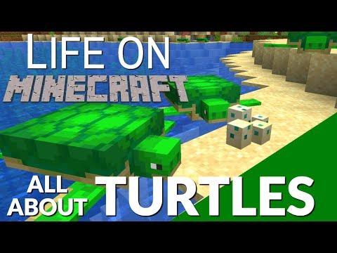 All About The Turtle In Minecraft & Turtle Eggs | How Turtle Eggs Hatch & How To Get A Turtle Shell
