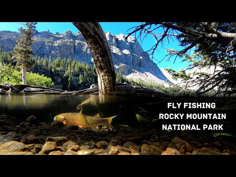 Colorado Cutthroat Slam! - Fly Fishing Rocky Mountain National Park