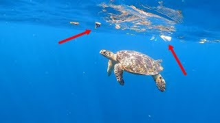Swimming with Turtles (and Trash) in Bali