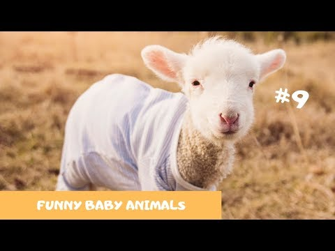 😂TRY NOT TO LAUGH - CUTE BABY ANIMALS  PART #9| 🐶Funny Animals🐩