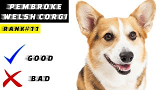 Pembroke Welsh Corgi Pros And Cons | The Good And The Bad