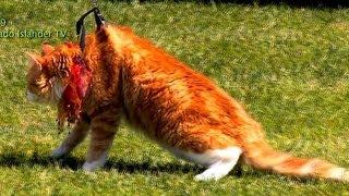 Coronado Pet Parade Chili Cook-off Brave Cute CAT Cool DOGS