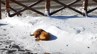 Abandoned Dog Sleeps On Snow For Days Until a Tourist Spots Her