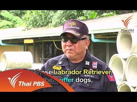 Police Dog - วันที่ 23 Nov 2014