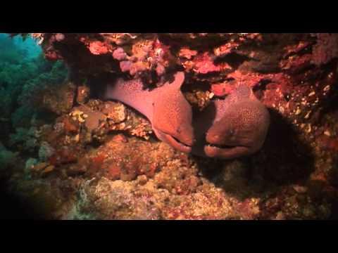 Diveworld Videos | short marsa shagra movie