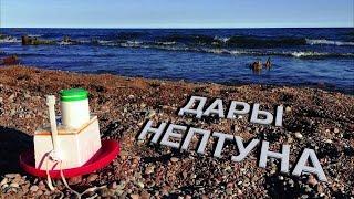 Дары Нептуна| Морские находки на берегу| Балтийское море