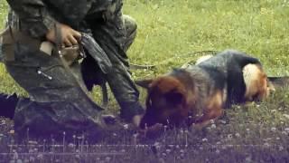 Собаки - саперы