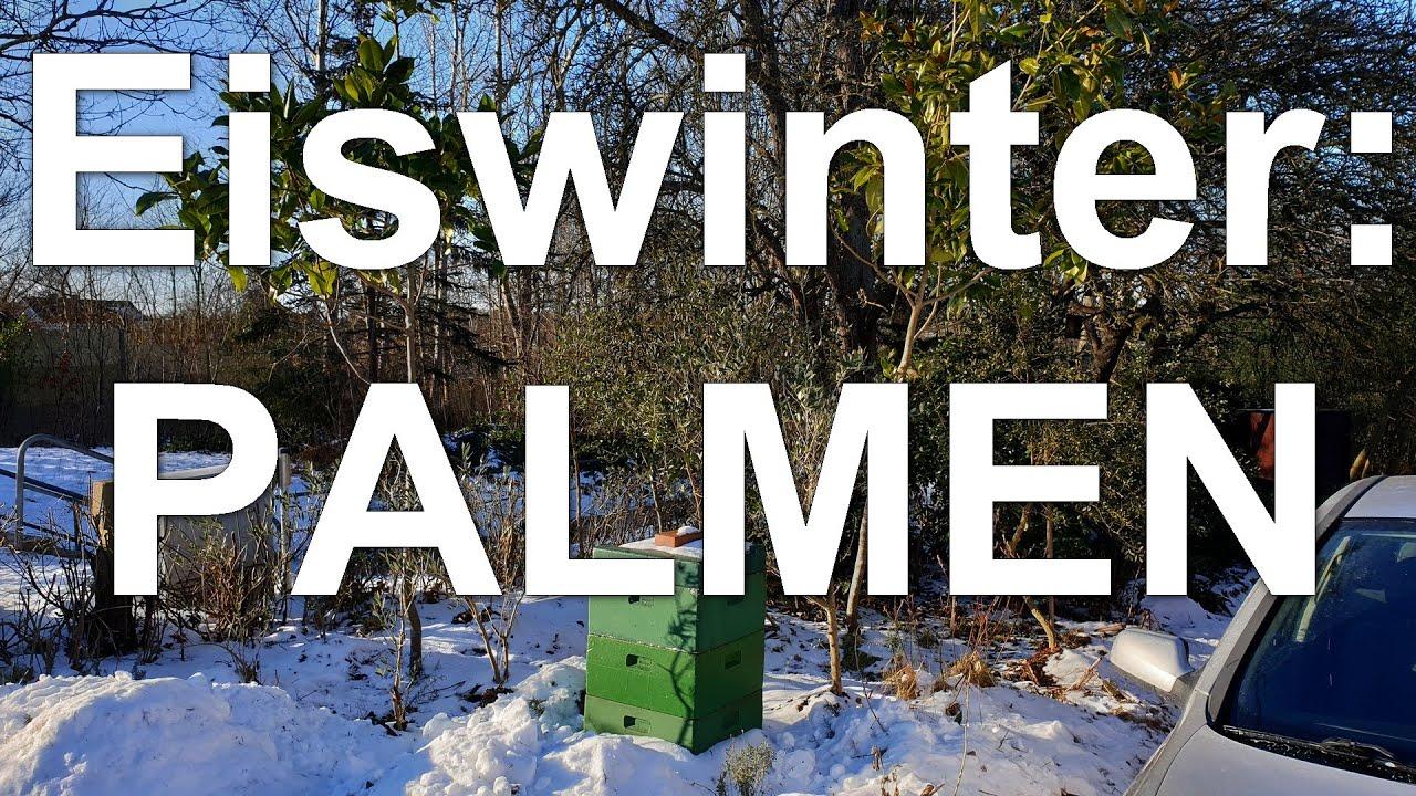 Strenger Winter: wie geht es den exotischen Pflanzen? Palmen Garten Mielkendorf