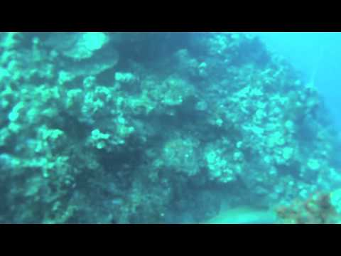 Darwin's Theory GoPro - Cayman Island