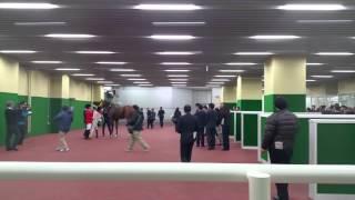 中京競馬場へ行ってきました.