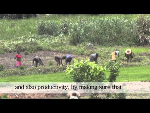 Sierra Leone: Farming as a business - Part I