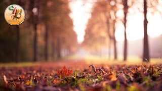 Autumn Leaves - Easy Light Sunny Orchestral Smile Hip Hop Rap Instrumental Beat / Shuka4Beats