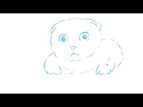 Scottish Fold - If you love them, don't breed them.