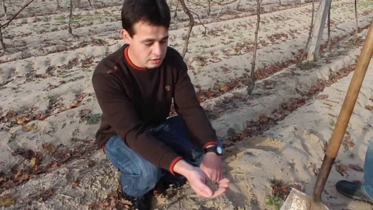 talaj méregtelenítése
