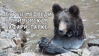 БУРЫЕ МЕДВЕДИ В ПРИМОРСКОМ САФАРИ-ПАРКЕ. 19 июня 2018 г.