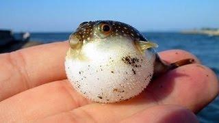 AMAZING BABY FISH