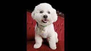 ТОП20 Самые дорогие собаки в мире#Топ20