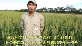 ボリビアより読谷村へのメッセージ2012/11/01
