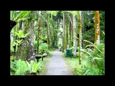 Wyee Nursery Movie Featuring Lush and Exotic Plants and Gardens in Tropical Bali