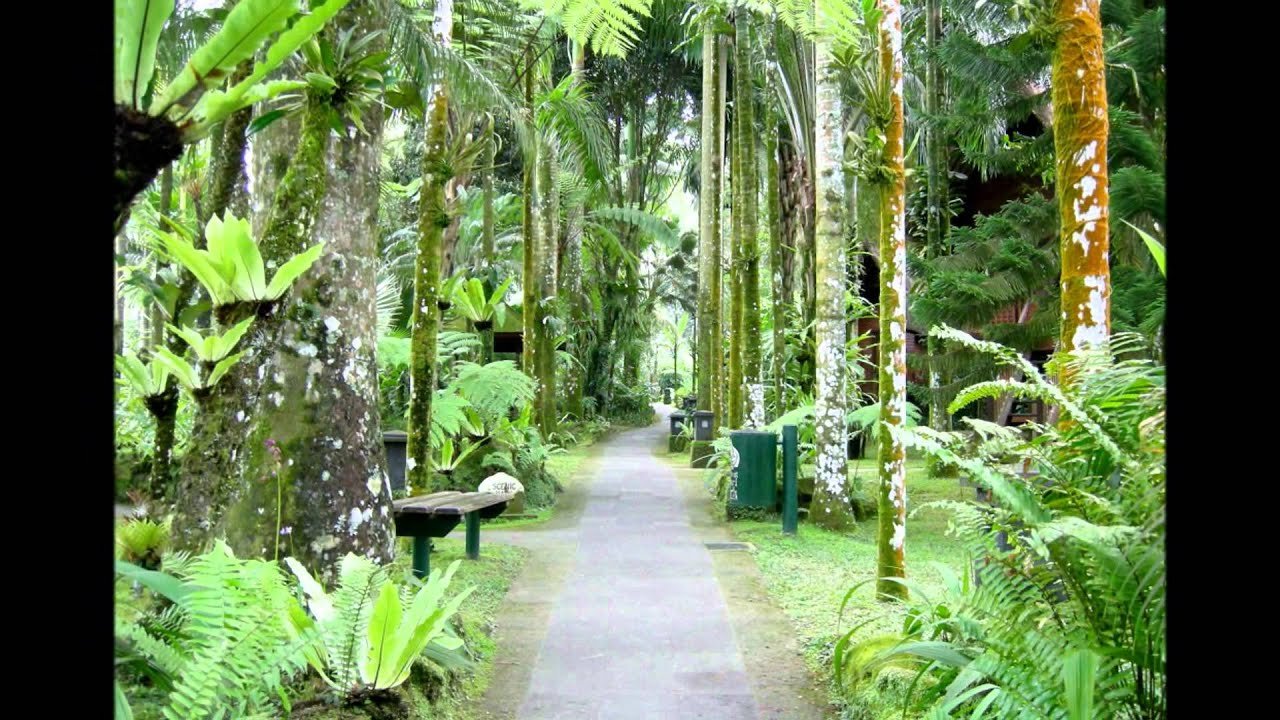 Wyee Nursery Movie Featuring Lush And Exotic Plants Gardens In Tropical Bali