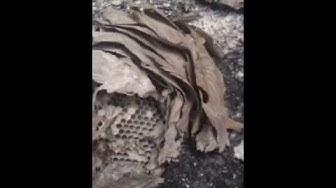 Exterminating NJ Bees, Termites, Squirrels, Cricket Control 732-309-4209 | Pest Control New Jersey
